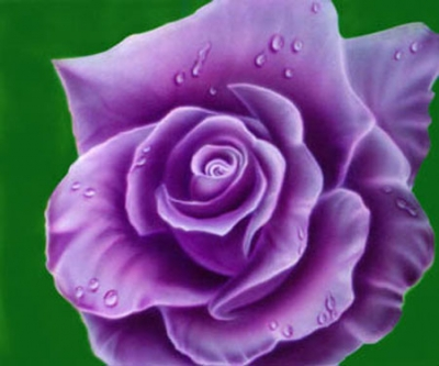 Meaning of roses by color purple rose meaning enchantment magnetism opulence majesty mightylinksfo